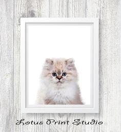 Cat Print Kitten Wall Art Nursery Poster Animal Photo
