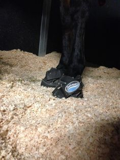 Sherry Cervi breaks down what she packs in her rig to keep her horses healthy on the rodeo road.