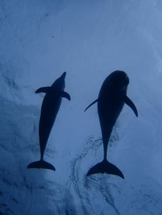 dolphin swim at Mikura island!