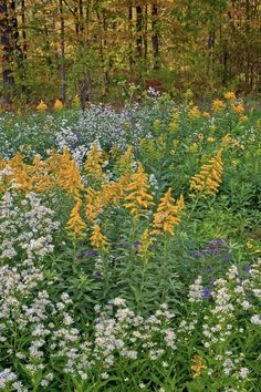 Gardening Autumn - golden rod and asters in the meadoiw garden autumn-fall-colorful-garden-karen-bussolini-gardenista - With the arrival of rains and falling temperatures autumn is a perfect opportunity to make new plantations Flower Landscape, Landscape Design, Garden Design, Prairie Garden, Meadow Garden, Garden Bed, Autumn Garden, Autumn Fall, New York