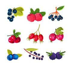 Juicy Colorful Berry Vector Set  by TopVectors on @creativemarket