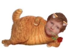 Stupid Funny Memes, Funny Laugh, Hilarious, Ed Shiran, Reaction Pictures, Funny Pictures, Ed Sheeran Love, Oui Oui, Cursed Images