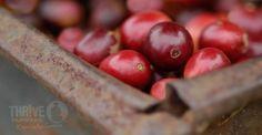 Coffee with a conscience. Coffee Supplies, Cherries, Farmer, Fruit, Eat, Recipes, Life, Food, Maraschino Cherries