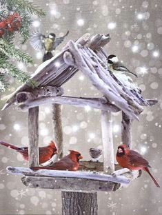 Christmas Crafts, Christmas Decorations, Montage Photo, Photocollage, Bird Houses, Bird Feeders, Photos, Canvas Prints, Birds