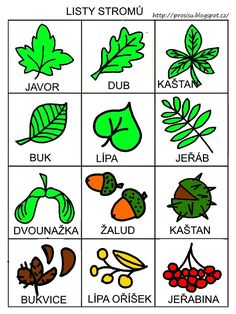 Listy stromu