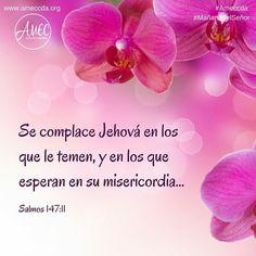 Se complace Jehová en los que le temen, y en los que esperan en su misericordia... Salmos 147:11 #MañanadelSeñor #Ameccda