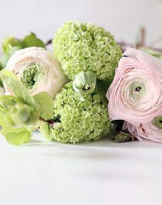 flowerpower5 Most Beautiful Flowers, Pretty Flowers, Faux Flowers, Flower Farm, My Flower, Ranunculus, Spring Flowers, Flower Designs, Flower Pictures