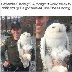 Funny Animal Memes of Day to Make You Smile - 3