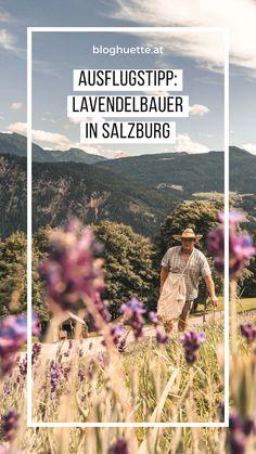 Michi Warter, der Lavendelbauer aus Radstadt erzählt bei einer Führung alles Wissenswertes über den Anbau von Lavendel in den Salzburger Alpen #bloghuette #salzburgersportwelt Activities, Movies, Movie Posters, Travel, Lavender, Alps, Interesting Facts, Viajes, Films