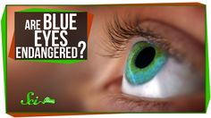 SciShow explains the genetics -- and physics -- behind why blue eyes are blue, and what the future may be for the trait. Spoiler alert: Blue eyes aren't real...