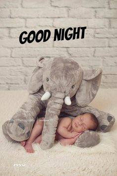 Newborn Elephant, Good Night Baby, New Baby Names, Best Baby Gifts, Newborn Baby Photography, Baby Arrival, Photographing Babies, Baby Month By Month, Baby Pictures