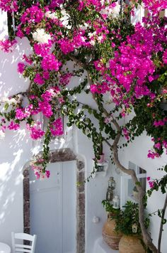 bougainvillea over whitewashed door in Bodrum, Turkey Bougainvillea, Beautiful Flowers, Beautiful Places, Plantation, Dream Garden, Pink Flowers, Exotic Flowers, Yellow Roses, Pink Roses