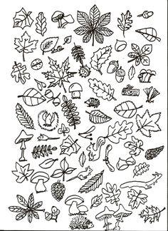 cherche et trouve (suite) - la maternelle de Camille - A utiliser avec un référentiel du nom des feuilles d'arbres