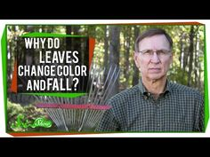 Guest host Michael Aranda explains the science of how and why leaves change color in the fall, and the cellular process by which they fall off trees in a New England Fall Foliage, Leaves Changing Color, Tree Study, Elementary Science, Science Lessons, Biology, Color Change, Homeschool, Teaching