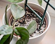 Sadenie mrkvy, hrachu, fazuľe, cibule či kalerábu – kedy a ako Plants, Plant, Planets