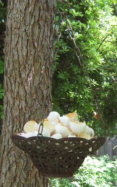 ~Eggshells for the birds~ I also crush dried eggshells and leave them scattered on the surface of my greens garden bed throughout the winter before I turn my soil for spring planting. Birds land and (Chicken Backyard Birds) Bird House Feeder, Diy Bird Feeder, Egg Shells In Garden, Bird Suet, Homemade Bird Feeders, Birds And The Bees, How To Attract Birds, Backyard Birds, Garden Projects