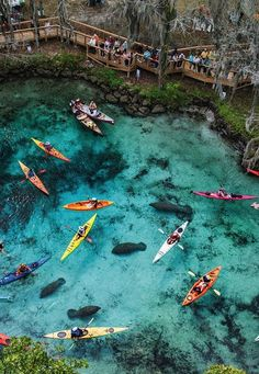 Florida- kayak trip- north of St Petersburg. 1 of 10 must see places in the world . possibly a very memorable thing to do on our October 2015 planned Florida vacation with Melissa and the kids. Vacation Destinations, Dream Vacations, Vacation Spots, Girls Vacation, Summer Vacations, Vacation Rentals, Vacation Ideas, Oh The Places You'll Go, Places To Travel