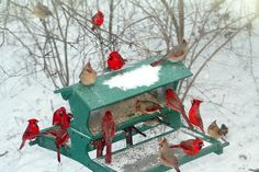 winter scenes with cardinals