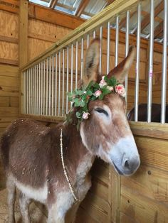 """Melissa Anderson Duran ~ Our darling, Alice as a """"bridesmaid"""" at our wedding last weekend. She really kind of stole the show... Burritos, Beautiful Horses, Animals Beautiful, Farm Animals, Cute Animals, Melissa Anderson, Cute Donkey, Animal Crackers, Down On The Farm"""
