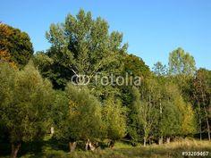 Alter Baumbestand am Grütebach zwischen Oerlinghausen und Asemissen in Ostwestfalen