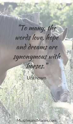 """""""To many, the words love, hope and dreams are synonymous with horses"""" - Author Unknown Horse Riding Quotes, Horse Quotes, Animal Quotes, Southern Sayings, Country Quotes, Winning Meme, Cowboy Quotes, Tumbler Quotes, Equestrian Quotes"""