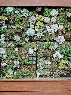 Dwell - How to Make Your Garden Water-Free