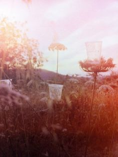 dandelion seeds tunable brain: mark borthwick
