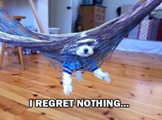 Dogs Who Very Rarely Have Regrets - 18 Pics