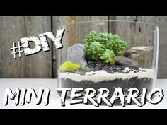 Ard Buffet, Cactus, 3, Make It Yourself, Green, Plants, Tutorial, Youtube, Mini Terrarium