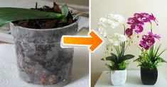 Orchids are pretty hearty flowers, but they still sometimes need a little bit of extra TLC to bring out all of their beautiful splendor. If you can't seem to revive yours, this is what you're doing wrong. Christmas Cactus Plant, Propagating Plants, Plants, Flowers Nature, Planting Flowers, Indoor Orchids, Orchids, Indoor Flowers, Plants For Hanging Baskets