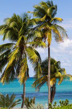 Palms near the ocean.....Beautiful Puerto Rico