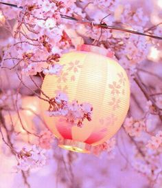 Immagine di flowers, pink, and japan