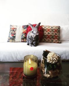 the perfect addition to our fresh geranium & mint candle burning . Watson, we love you. Best Fragrances, Urban, Nature Decor, Burning Candle, Geraniums, Warriors, Mint, Candles, Throw Pillows