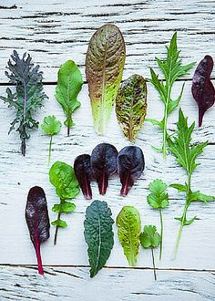 Grow your own greens in the smallest of gardens. Beautiful and full of flavour to add to your salads! Pick your own leaves, such a healthy treat. Tips for food gardening with Emily Murphy. Veg Garden, Edible Garden, Easy Garden, Garden Path, Vegetable Gardening, Container Gardening, Gardening Tips, Organic Gardening, Indoor Gardening