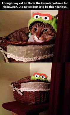 Oscar the Grouch | Community Post: 31 Cats That Are Doing Halloween Better Than You
