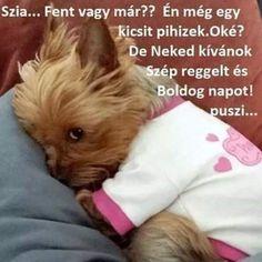 Good Morning, Dogs, Animals, Buen Dia, Animales, Bonjour, Animaux, Pet Dogs, Doggies