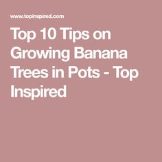 Top 10 Tips on Growing Banana Trees in Pots - Top Inspired