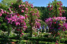 The Butchart Gardens – Victoria, Canada – Sunken Garden Victoria Attractions, Olive Garden Delivery, Buchart Gardens, Tulip Season, China Garden, Sunken Garden, Famous Gardens, Victorian Gardens, Most Beautiful Gardens