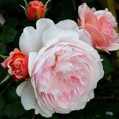 A Shropshire Lad | Flickr - Photo Sharing!