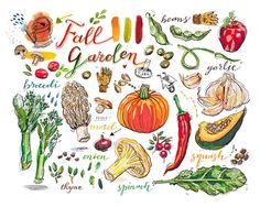 jardín de otoño impresión. Cosecha de otoño. Ilustración de alimentos. decoración de la cocina. arco iris. comer local. mercado de agricultores. verduras de temporada. jardinería. arte