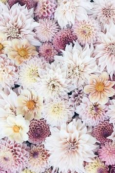 Where flowers bloom, so does hope 🌸 Live Love Life, Bloom, Flowers, Plants, Inspiration, Beautiful, Biblical Inspiration, Plant, Royal Icing Flowers
