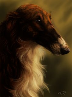 Borzoi...my dream dog. HD: Don't wait!  They love to run but are the ultimate couch potato!