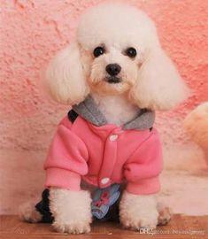 Resultado de imagen para ropa para perros Animals And Pets, Teddy Bear, Cloths, Wattpad, Sun, Pet Clothes, Men's Clothing, Caps Hats, Animales