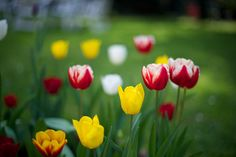 25 Aprile/April 25th by DocG2008, via Flickr