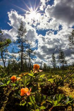 Jrr Tolkien, Finland, Contemporary Design, Mythology, Birches, Pumpkin, Landscape, Seas, Nature