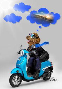 poodle, motor, biker