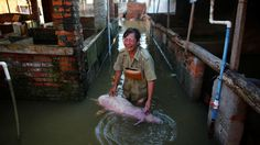 07/23/2016 - Some 8.6 million people have been affected by destructive floods and landslides caused by heavy rain in China, local media report. Officials said that at least 154 people have been killed and the death toll is likely to rise.