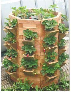 Tour-a-fraisiers en bois et pyramide de fraise