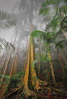 Mount Tamborine Rainforest, South East Queensland, Australia >>> This is beautiful!-One more reason I want to move to Australia Queensland Australia, Australia Travel, South Australia, Victoria Australia, Western Australia, Gold Coast Queensland, Gold Coast Australia, Visit Australia, Places To Travel