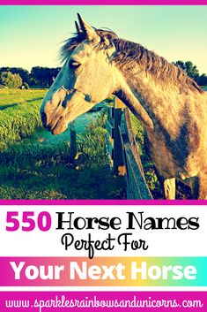 Find the perfect name for your new equine friend. In this article you   will find 550 horse names some unique and some more common. These names   are divided up into categories based on the horses personality or the   way the horse looks. I have also included a free printable game to help   you narrow down your choices for a horse name. Good luck choosing just   the right name. #horsenames #besthorsenames #uniquehorsenames   #blackhorsenames #palominohorsenames #sillyhorsenames… Horseback Riding Tips, Horse Riding Tips, Best Horse Names, Disney Horses, Animals Beautiful, Cute Animals, Wild Animals Pictures, Winged Horse, Cute Fox
